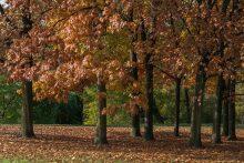 park, lesopark, stromy