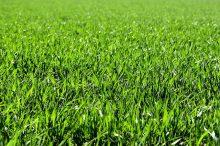 tráva, trávník, sucho, sekání trávy, sečení trávy